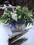 Silent Night - A stunning collection of parrot tulips, clematis, stock, astilbe and euphorbia adorned with a blue and silver ribbon is the perfect non-traditional Christmas gift.