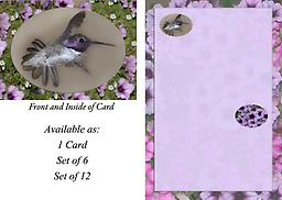 HH1428GC This 4.75 x 3.5 Blank Note Card has a male Costa's in flight displaying his tail all fanned out as he zips past. He is displayed in an oval framed with a background of flowers.
