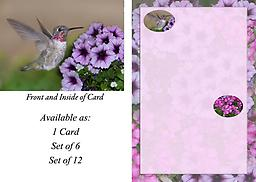 HH1429GC This 4.75 x 3.5 Blank Note Card has a baby male Anna's landing at lavender Petunia flowers. Card in Premium 14 Pt Gloss Coated Paper with UV