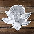 Hester & Cook - Daffodil Placemat - When the daffodils are blooming outside, wow your guests with these precious die-cut paper placemats sheets inside. Use them as they are or decorate them with colored pencils or markers.