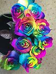 Dozen rainbow roses - dozen beautifully arranged rainbow roses!