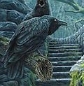 """ The Watchman Raven"" by Lisa Parker - Magnet"