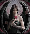 "Anne Stokes ""Elements"" Incense Designer Fragrance - "" Angel Rose"" @ The Mystics Touch - ""The Aromatic and unmistakable heavenly perfume of Red Rose fills the air whenever she is near. "" 20 stick pack"