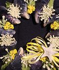 White Mini Wreath (Yellow) - Hand picked Mussel Shells