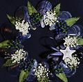 Mini Wreath (Navy) - Hand picked Mussel Shells