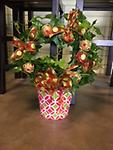 Christmas Fresh Ivy Wreath Plant - Great gift or piece to brighten up a room