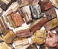 Petrified Wood - Raw Crystals & Minerals