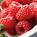 Mammoth Red Raspberry - Junebearing, firm is very large, sweet, and firm. High yields ripening in late June. Great for eating fresh, freezing, or canning.