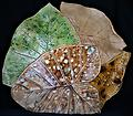 Multi-Leaf Platter - Natural - Hand-built, original art piece that is food safe. Available in many finishes.