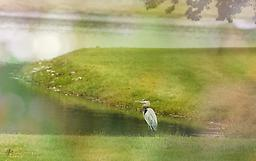 "Heron on a Hazy Day - 8"" x 12"" print A handsome heron gazes out over a Kentucky lake"