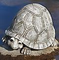 Turtle Garden Statue - Curbside Pickup - Turtle Garden Statue 7 inches tall