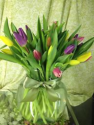 40 Tulips Nothing says spring more than a large vase of tulips!! 40 stems of assorted colored tulips, direct from Holland is sure to put a smile on anyone's face.