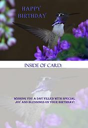 """HH1313GC Happy Birthday Costas Hummingbird Greeting Card This 5"""" x 7"""" Birthday Card has a brilliantly colorful, mature male Costa's hummingbird with his wings outstretch in front of purple flowers. His gorget (throat area) is displaying his full color!"""