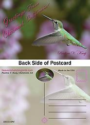 """HH1311PC Claremont Postcard with a Female Hummingbird in Flight Postcard - 4"""" X 6"""" Premium 14 Pt Gloss Coated Paper with UV. Greetings from Claremont California postcard showcases a a close profile view of a beautiful female Hummingbird in flight."""