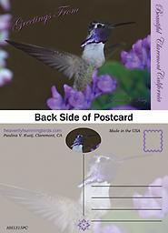 HH1315PC Greetings from Beautiful Claremont California Postcard Greetings from Beautiful Claremont California Postcard Showcases a beautiful male Costas Hummingbird with wings outstretched at purple flowers.