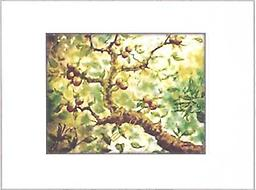 """In Light of Apples PRINT PRINT 8""""x10"""" Original watercolor sold: PRINT available. Looking up through the branches of an apple tree on a sunny day. MATTED AND FRAMED UNDER GLASS (11"""" x 14"""")"""
