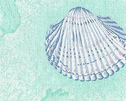 """BC31- Sea Shells (F0275) Deluxe Flannel Back Vinyl Tablecloth. Order by the roll which is 54"""" wide x 15 yards long. The material is reusable and durable for both indoor and outdoor use."""